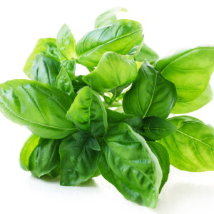 Herb Series – Basil