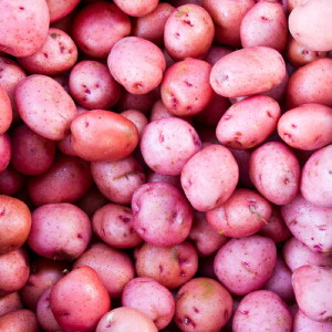 Red potatoes on display